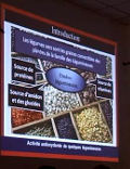 Activité antioxydante de quelques légumineuses