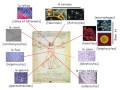 Cours N° 1: Génétique générale et moléculaire: Historique et généralités