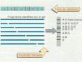 Cours N°22: Manipulation de l'ADN part2
