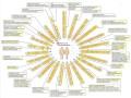 Cours N°15: Génétique moléculaire – L'ADN: Mutation et mutagenèse