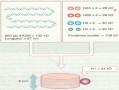 Cours N°21: Organisation de l'ADN en chromosome