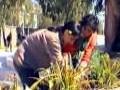 compagne de reboisement à l'université de bejaia
